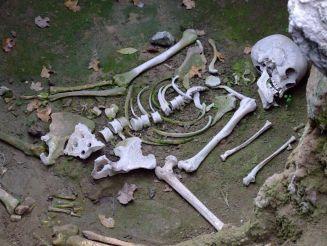 Дманисский археологический музей-заповедник, Дманиси