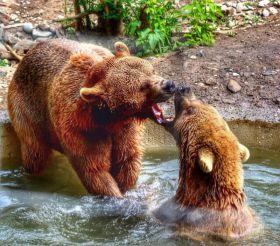 Zoo, Tbilisi